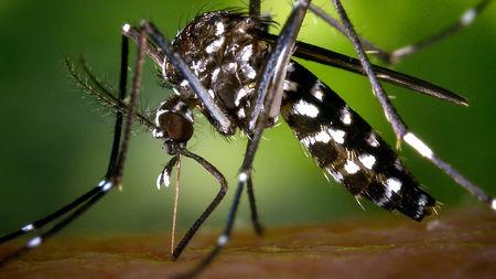 mosquito_16x9