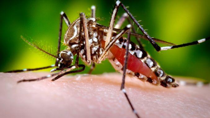 mosquito_cdc 2