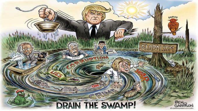 swamp 2a
